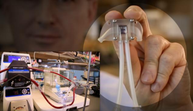 Cientistas criam rim biônico que dispensa máquina de hemodiálise