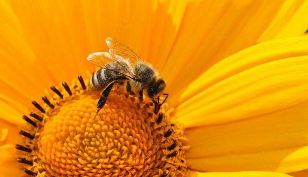 Tecnologia para reduzir a perda de abelhas será construída no Nordeste