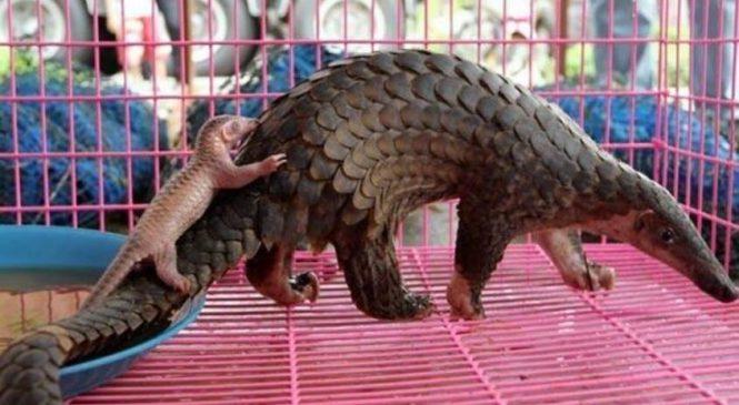 China proíbiu o comércio e consumo de animais selvagens