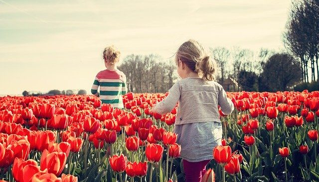 Quarentena pode gerar lindo verão com várias flores na Europa