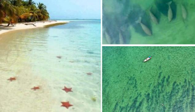 Quarentena: praias fechadas aparecem cheias de estrelas-do-mar e peixes-boi