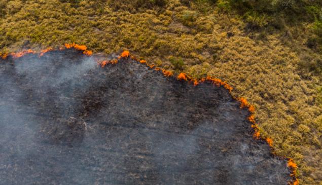 Cientistas da UFMG criam tecnologia que prevê incêndios florestais