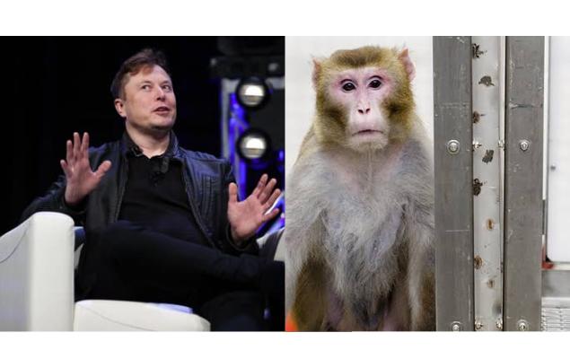 Neuralink faz macaco jogar com a mente e quer criar vida eterna